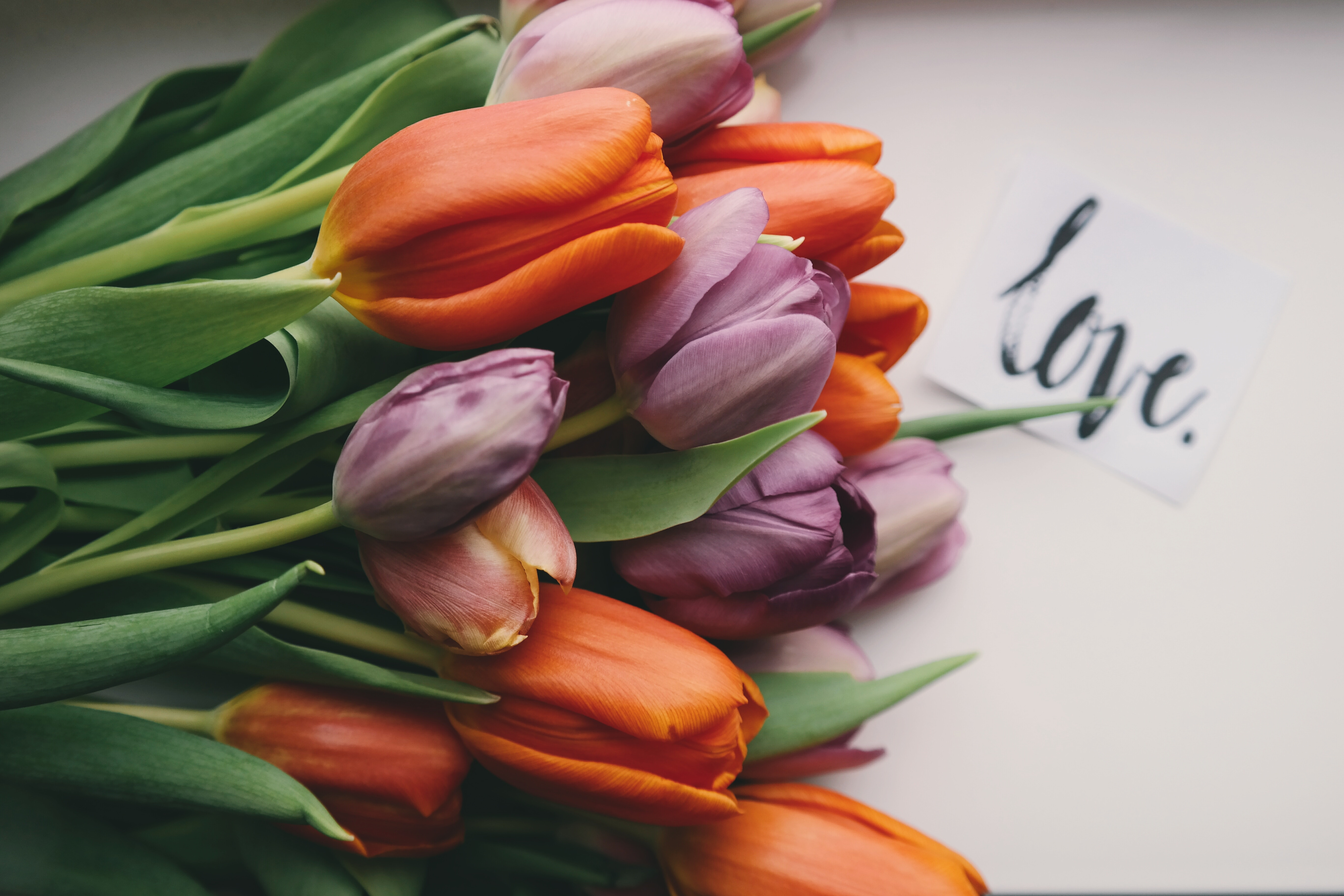 Valentinstag 2018 Popel Blumen Garten